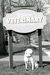 Wilson Vet Hospital's Original Location